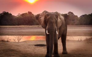 Kodanad elephant kerala